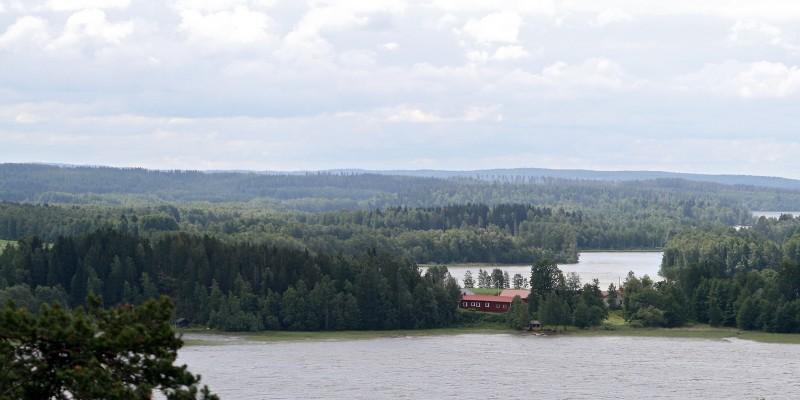 Metsää ja vettä. Kuva: Krista Kimmo