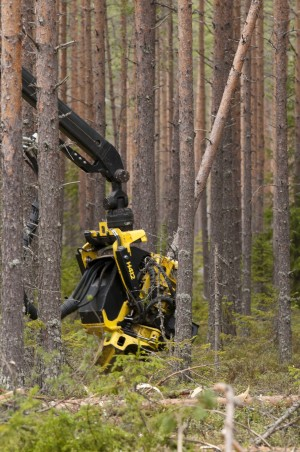 The thinnings and fellings in Jointly Owned Forests interest buyers. Photo: Saku Ruusila