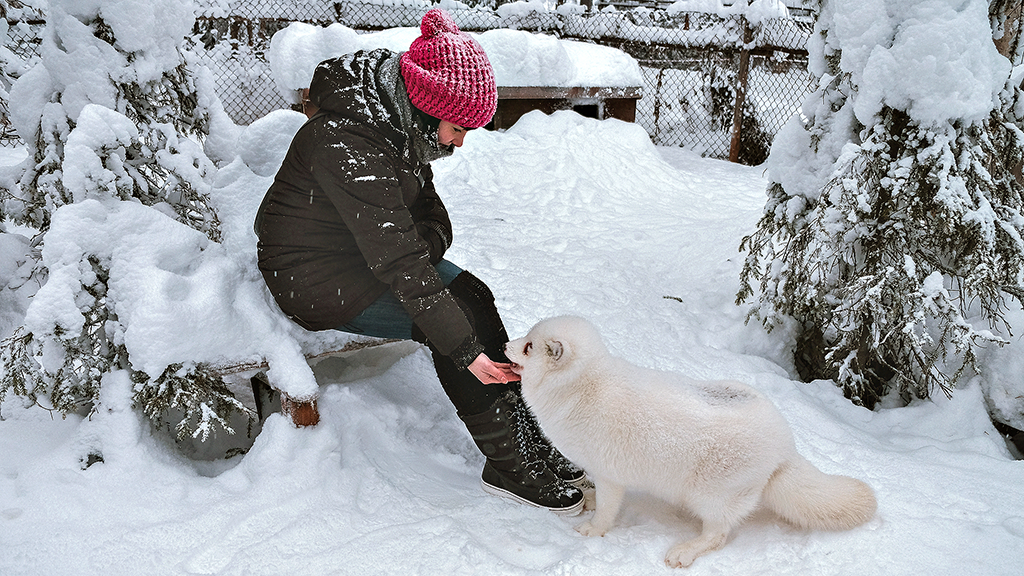 Anna Niemelä of the Lapland Film Commission and her Arctic fox friend.