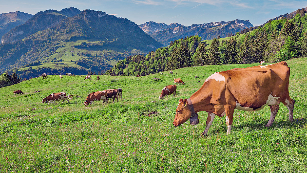 Plan a cheesy visit to the culinary cool of Switzerland