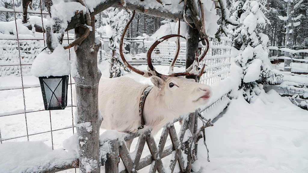 Luxury extras include visits to reindeer farms.