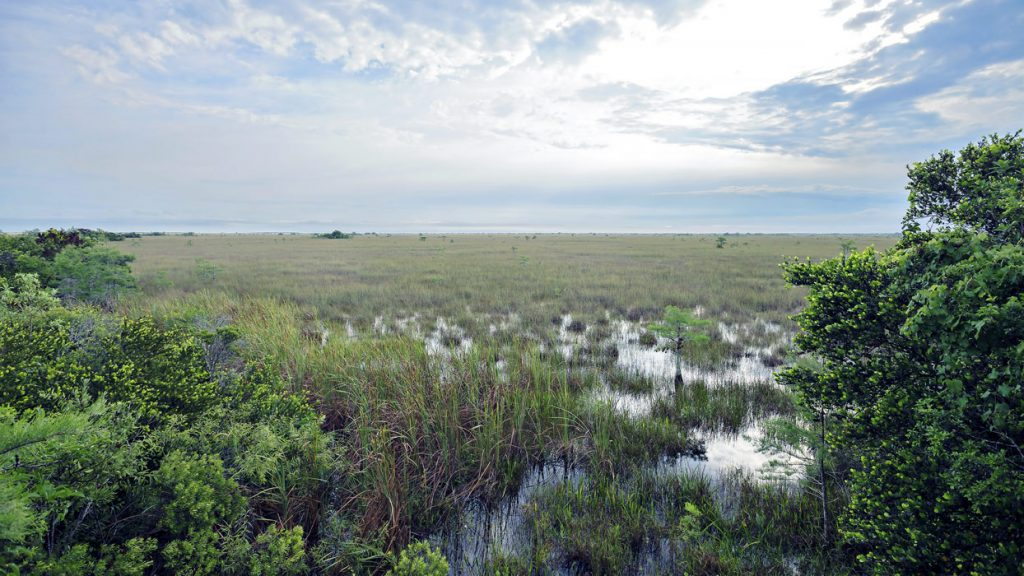 Get wet and wild in Miami's Everglades