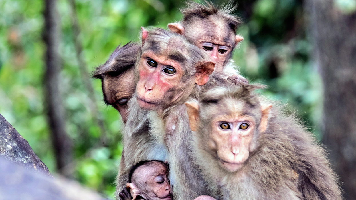 Experience Kerala's animal magic