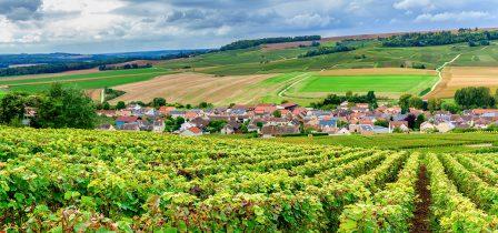 Enjoy a day at a vineyard