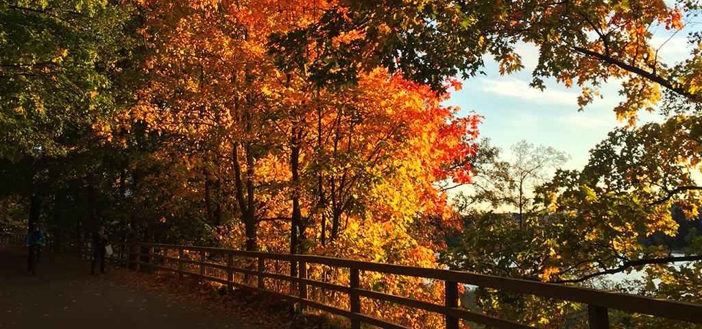 Your fall season checklist