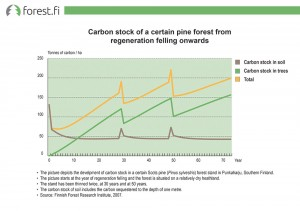 Carbon stock of a certain pine forest from regeneration felling onwards