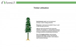 Timber utilisation