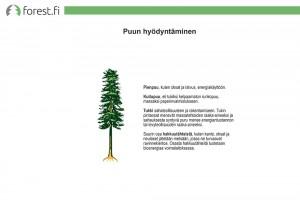 Puun hyödyntäminen