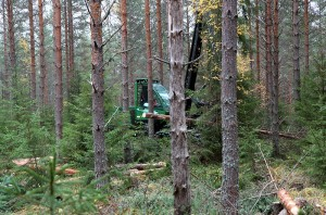 Changing even-aged forest to uneven-aged by means of logging. The project may be sensible if there is undergrowth in the forest, but in all cases the change takes a long time, sometimes decades. Photo: Krista Kimmo