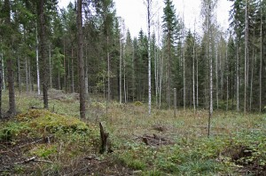 Small-diameter logging area from Erika research project in Vesijako, Padasjoki. Photo: Krista Kimmo