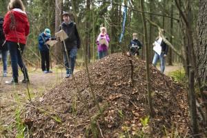 Bygger myror sin stack hellre på söder- eller norrsidan av trädet? Foto: Vilma Issakainen