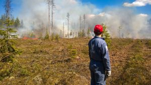 Burning ten hectares of forest requires ten to fifteen workers. Photo: Jukka Laulainen