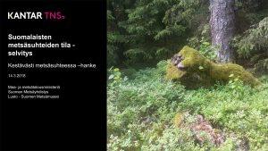 Suomalaisten metsäsuhteiden tila -selvitys